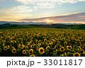 丘 美瑛町 新栄の丘の写真 33011817