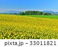 丘 美瑛町 新栄の丘の写真 33011821
