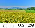 丘 美瑛町 新栄の丘の写真 33011826