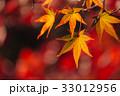 紅葉 もみじ 楓の写真 33012956