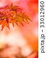 紅葉 もみじ 楓の写真 33012960