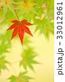 紅葉 もみじ 楓の写真 33012961