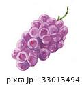 フルーツ 巨峰 ぶどうのイラスト 33013494