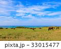 牛 石垣島 海 33015477