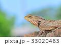 カメレオン バックグラウンド 背景の写真 33020463