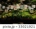 朝市での野菜の苗販売 33021921