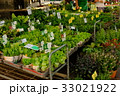 朝市での野菜の苗販売 33021922