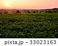 畑 美瑛町 三愛の丘の写真 33023163