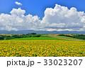 丘 美瑛町 新栄の丘の写真 33023207