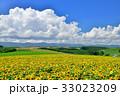丘 美瑛町 新栄の丘の写真 33023209