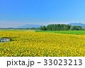 丘 美瑛町 新栄の丘の写真 33023213