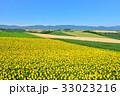 丘 美瑛町 新栄の丘の写真 33023216
