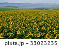 丘 美瑛町 新栄の丘の写真 33023235