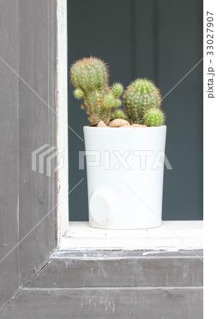 Cactus Plant Beside Window 33027907