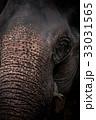 ぞう ゾウ 象の写真 33031565