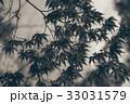 日本 紅葉 赤の写真 33031579