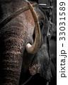 ぞう ゾウ 象の写真 33031589