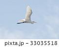 野鳥 飛翔 シラサギの写真 33035518