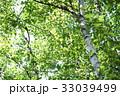緑 新緑 さわやか 33039499