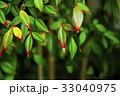 植物,變色葉,秋天,植物、葉の色、秋、Plants, color leaves, autumn, 33040975