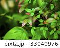 植物,變色葉,秋天,植物、葉の色、秋、Plants, color leaves, autumn, 33040976