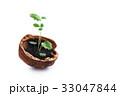 エコ 木の実 くるみの写真 33047844