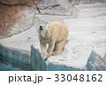 ホッキョクグマ 熊 天王寺動物園の写真 33048162