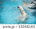 熊 ホッキョクグマ 白熊の写真 33048163