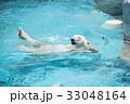 熊 ホッキョクグマ 白熊の写真 33048164