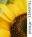 みつばち ミツバチ 蜜蜂 ひまわり ヒマワリ 向日葵 夏 コピースペース 鮮明 黄色 自然 33049781