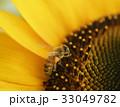 みつばち ミツバチ 蜜蜂 ひまわり ヒマワリ 向日葵 夏 コピースペース 鮮明 黄色 自然 33049782