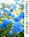 紫陽花 花 植物の写真 33049861