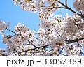 桜 サクラ ソメイヨシノの写真 33052389