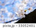 桜 サクラ 花の写真 33052401