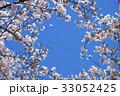 桜 サクラ ソメイヨシノの写真 33052425