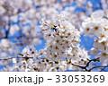 桜 サクラ 花の写真 33053269