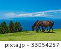 都井岬の岬馬 33054257
