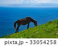 岬馬 馬 動物の写真 33054258