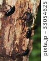 昆虫 33054625