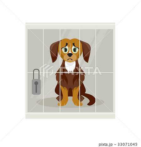 Stray dog in a cage 33071045