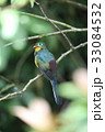 野鳥 動物 カラフルの写真 33084532