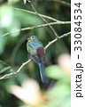野鳥 動物 カラフルの写真 33084534