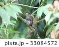 動物 げっ歯類 齧歯目の写真 33084572