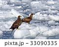 2月 流氷にのるオジロワシ -冬の北海道- 33090335