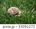 無人 野生動物 野生生物の写真 33091272