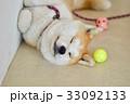 秋田犬 33092133