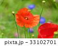 花 赤色 ポピーの写真 33102701