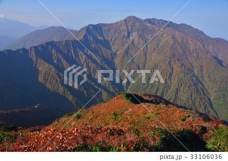 越後駒ケ岳グシガハナへの登りからの紅葉の尾根と八海山 33106036