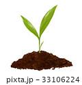 芽 発芽 成長 イラスト 33106224