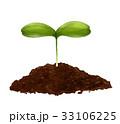 芽 発芽 成長 イラスト 33106225